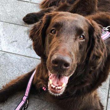 Lahmer Hund - Feldenkraisbehandlung