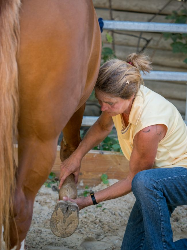 feldenkrais für pferde