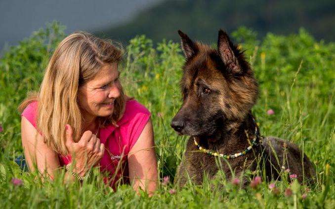 deutscher schaeferhund im gras