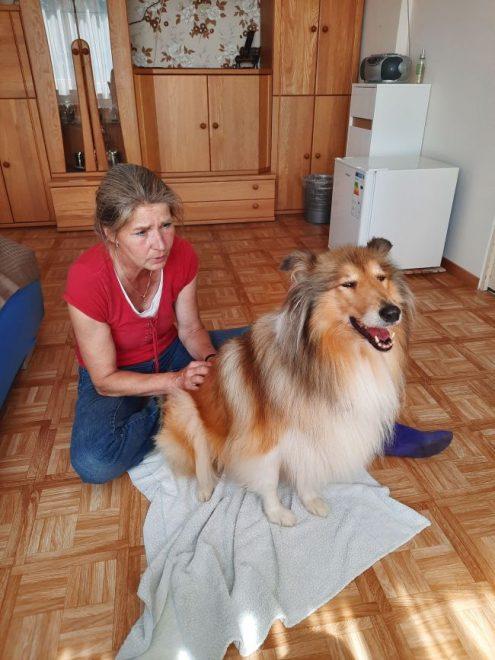 Feldenkrais für Hunde